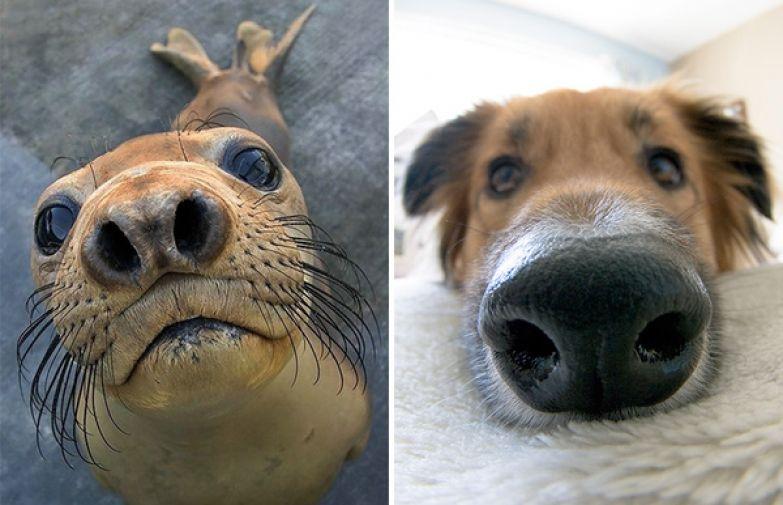 Тюлени на самом деле морские щенки тюлень, собака, длиннопост