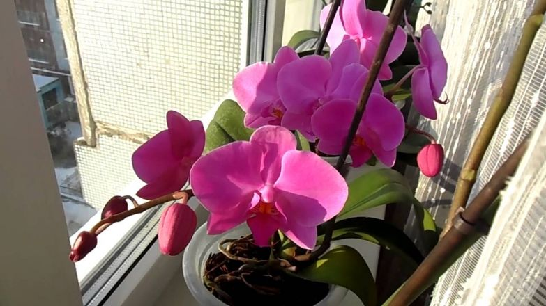 """Результат пошуку зображень за запитом """"цветущие орхидеи"""""""