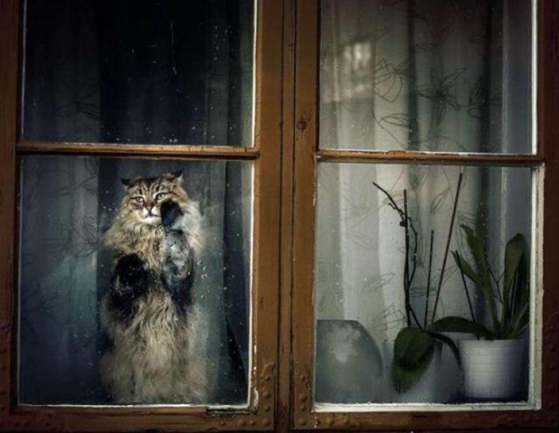 Мохнатые Ждуняшки. Милые котики, которые с нетерпением ждут своих хозяев