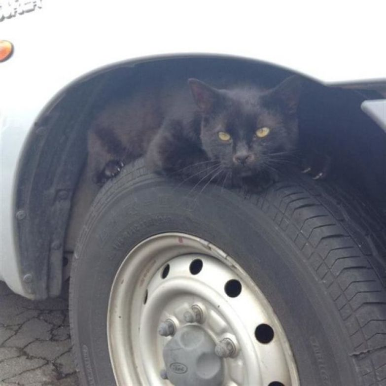 20 фотографий, которые доказывают, что все коты — секретные агенты