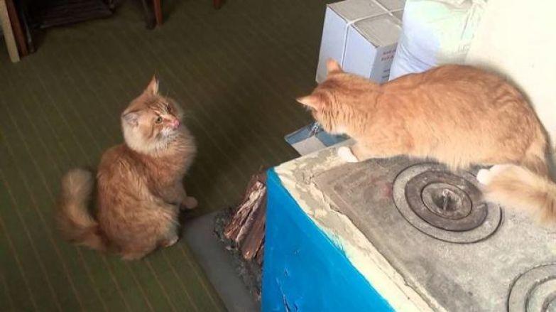Кот в магазине выпрашивал мясо и куда-то уносил