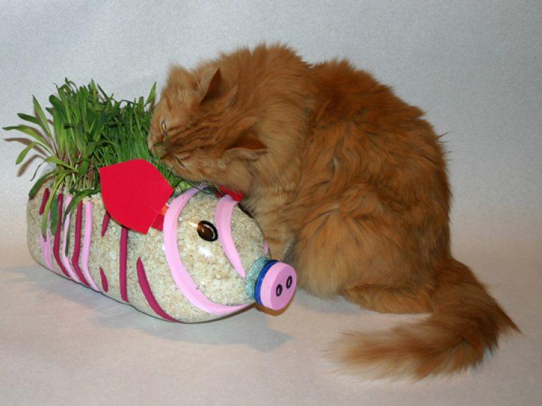 Кошачья клумба