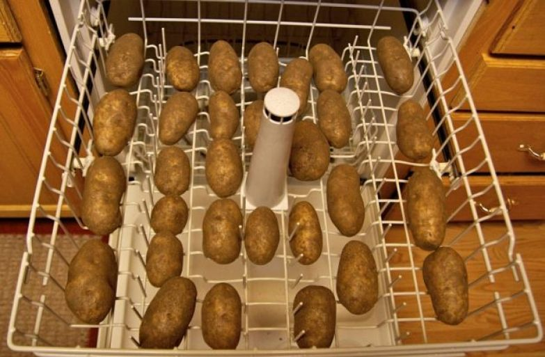 Как пользоваться посудомоечной машиной: мыть овощи