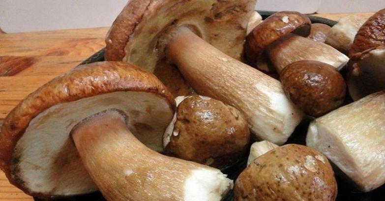 белый гриб в горшке