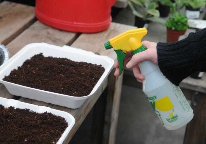 полив микрозелени