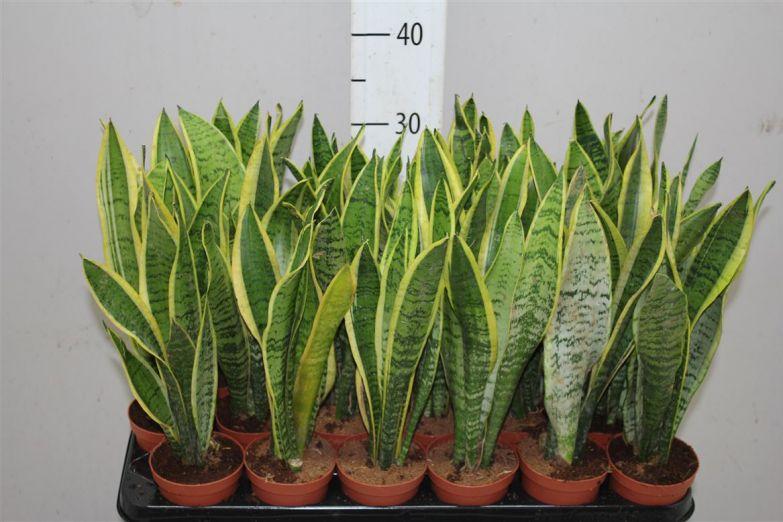 яркие домашние растения