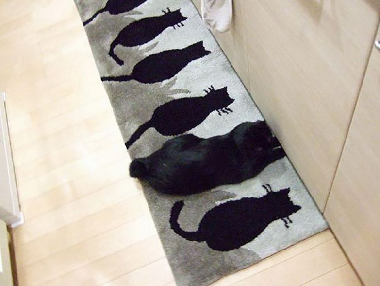 Just A Mat With Cats. Oh Wait