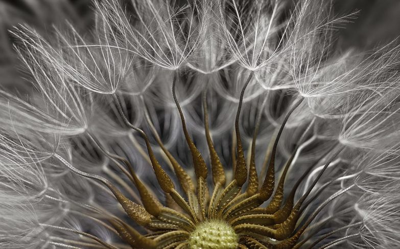This image came in second. It shows the seed-filled head of a groundsel flower.