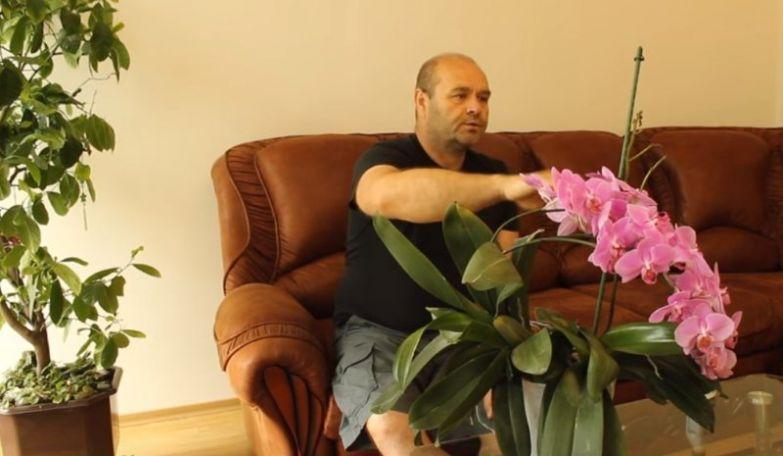 как заставить цвести орхидею в домашних условиях
