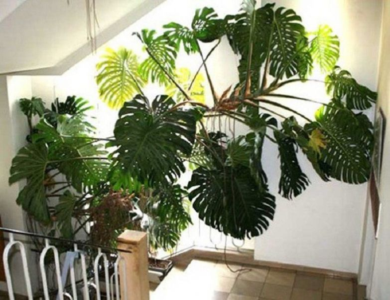 энергетика растений