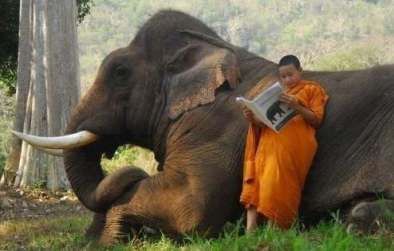 И никогда не поздно читать инструкцию. Купил слона? А есть ли к нему инструкция? годнота, инструкции, инструкция, полезности, прикол, смешные инструкции