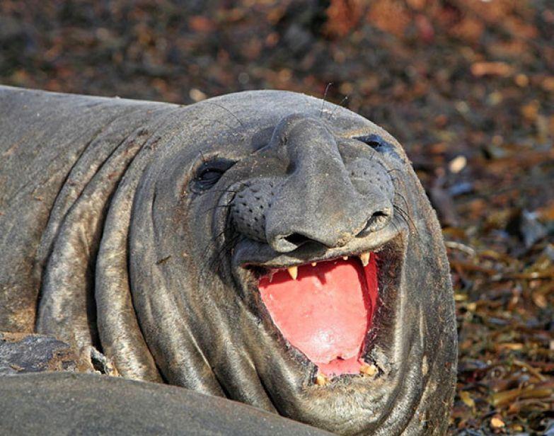 78. животное, улыбка