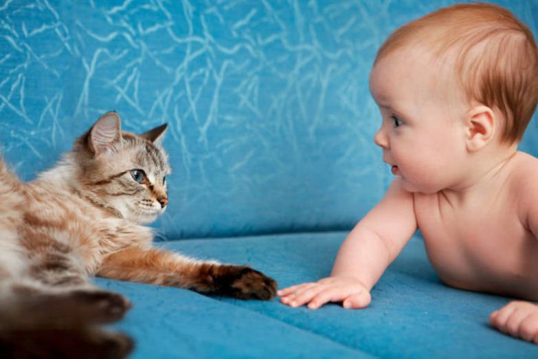 18. Этот умиляющий взгляд кот, малыш, очарование
