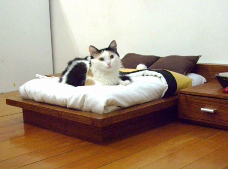 Кошачий интерьер 5