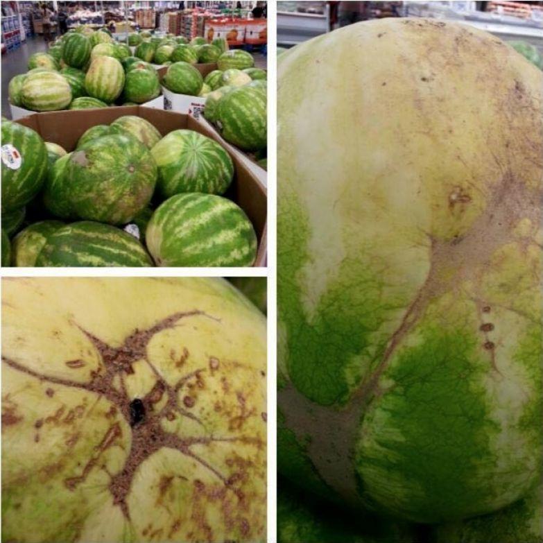 Как правильно выбирать арбуз: трюки, которые мне поведал фермер