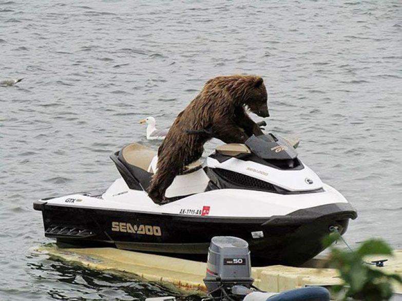 Медведи 19