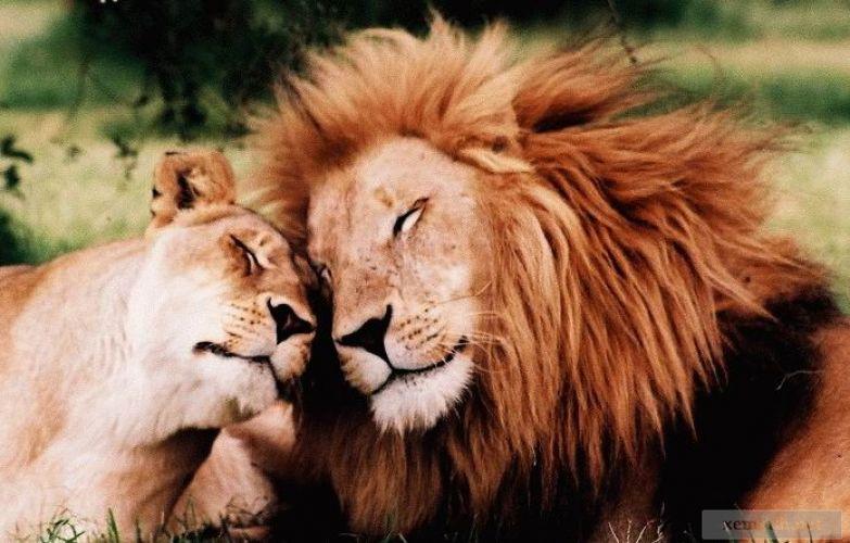 Любовь животных 1