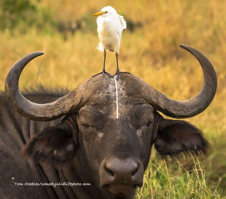 8. животные, конкурс, смех