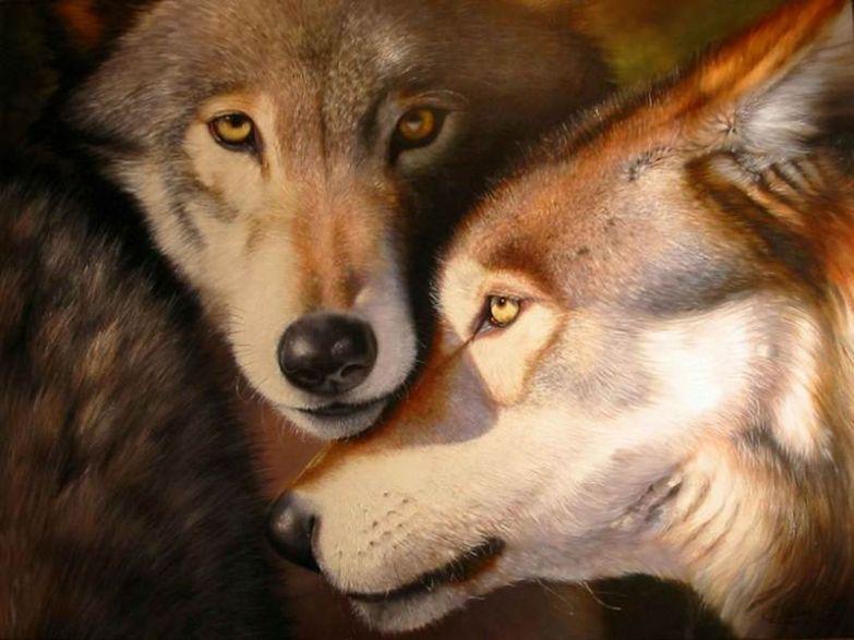Любовь животных 2