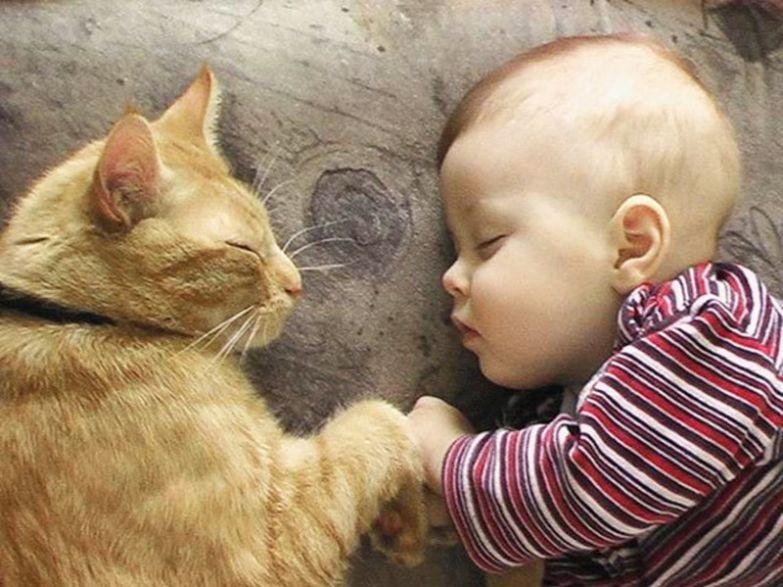 3. Это и есть совершенство кот, малыш, очарование