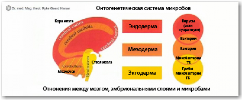 рис28р