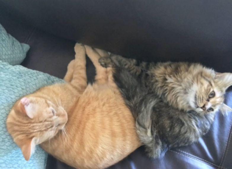 """""""Вместе спят, едят, дерут елку"""". Любовь, животные, кот"""