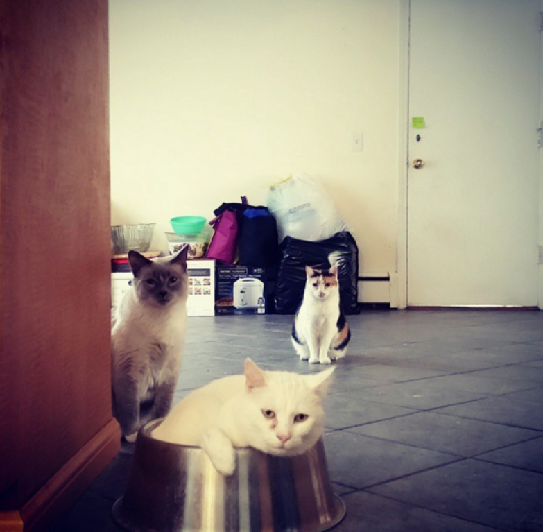 16. Когда открываешь корм жизнь, кошка, ситуация