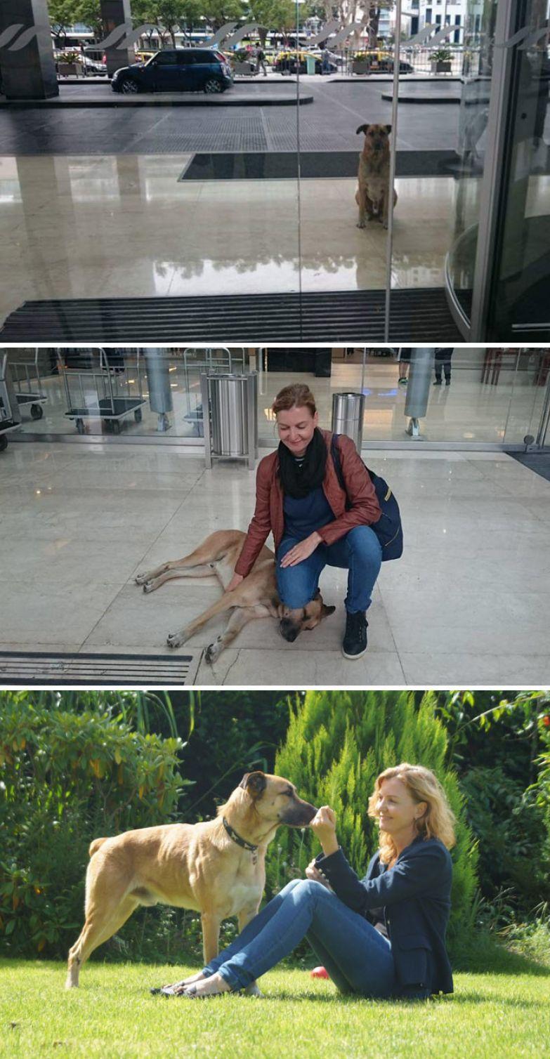 10. Стюардесса забрала домой бездомную собаку, которая ждала ее после каждого рейса доброта, мир, поступок