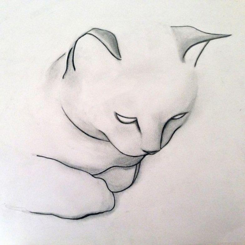 Кошечки 5