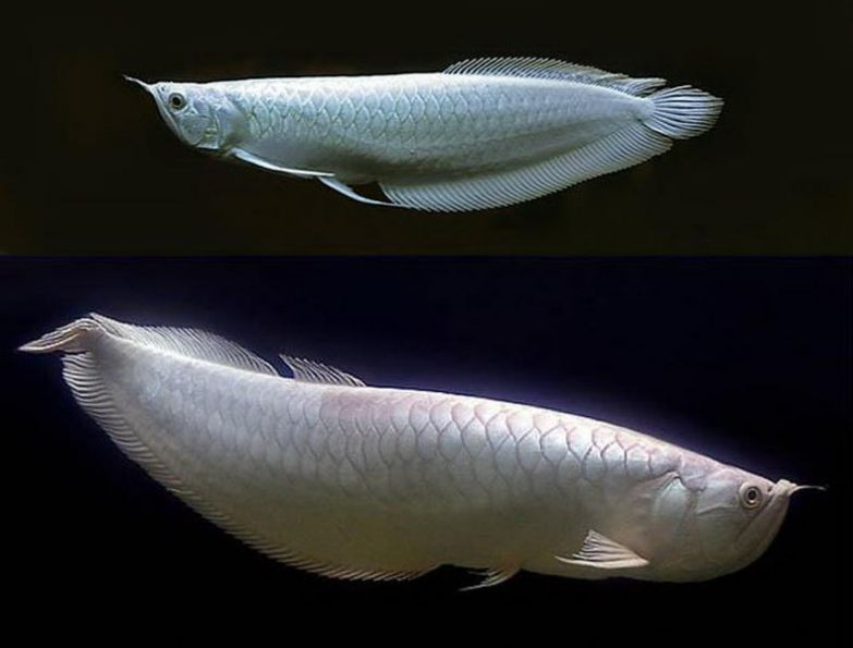 Самая дорогая рыба в мире. Топ 10
