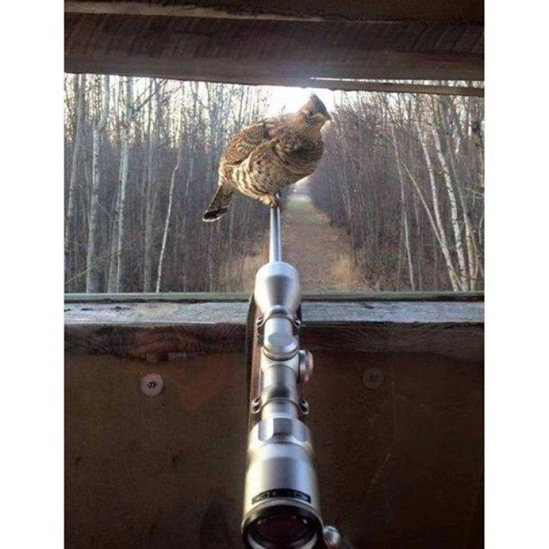 Некоторые ситуации на охоте могут поставить в тупик охота, прикол, юмор