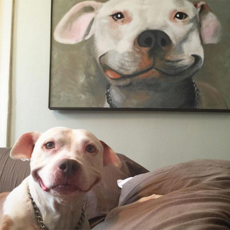 29. животное, улыбка