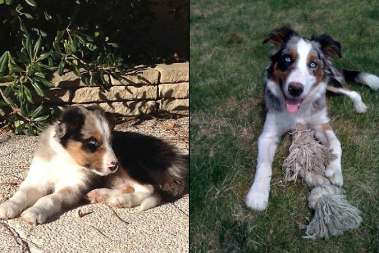 Гелиос - 2 месяца и полгода до и после, животные, любимцы, мило, питомцы, собаки, трогательно, фото