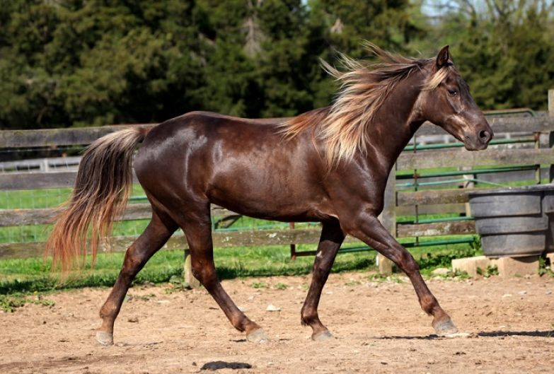 Масть лошади является одной из самых загадочных и красивых.