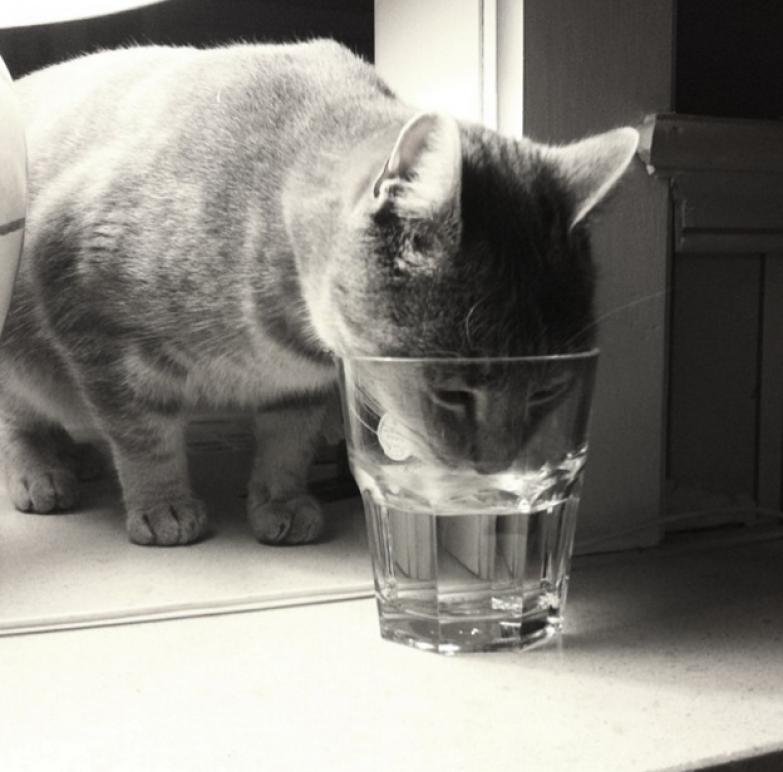 21. Когда кошке хочется попить именно из твоего стакана жизнь, кошка, ситуация