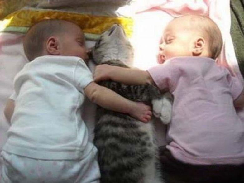 Кошки - лучшие няньки дети, прикол, юмор