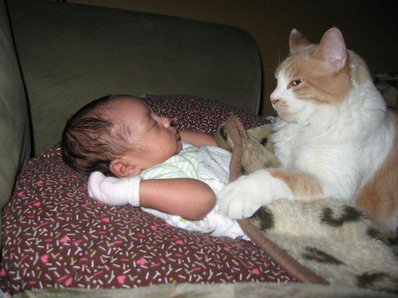 7. Настоящая охрана кот, малыш, очарование