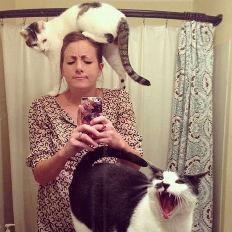 11. Кошачья собственность обозначена.