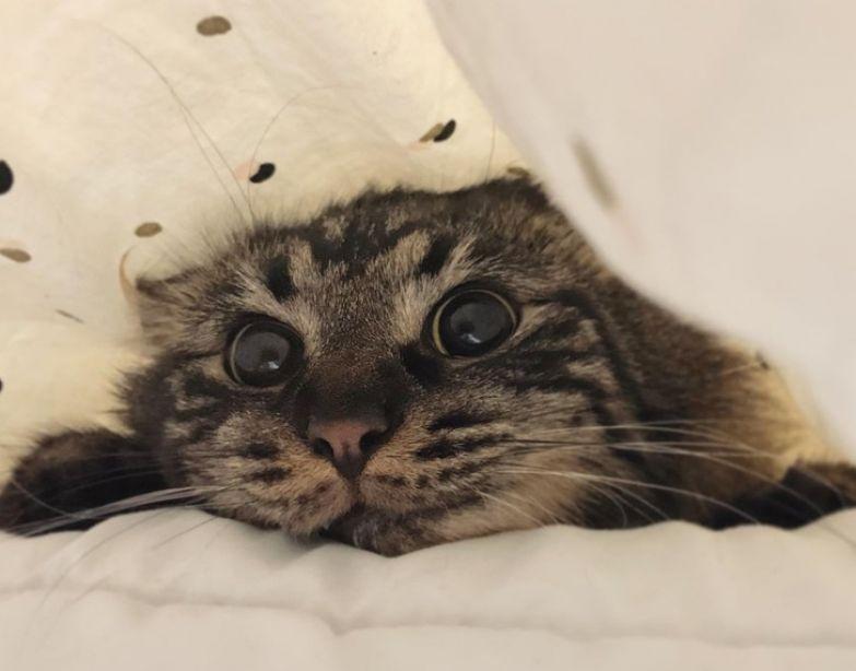 Ученые выяснили, что кошки воспринимают нас как родителей