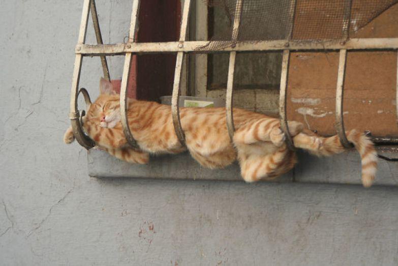 9. Сладкие сны животные, кошка, сон