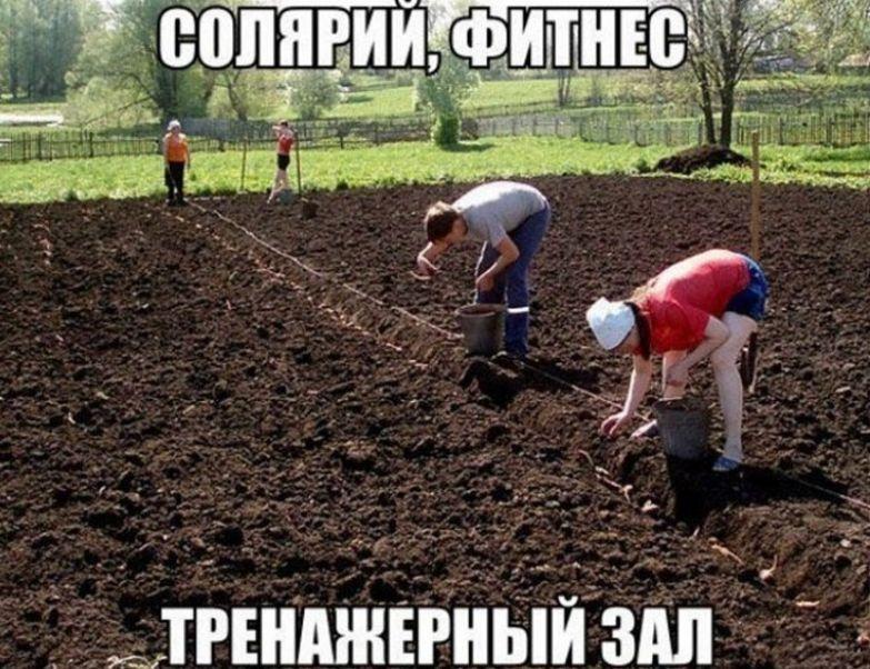 19. Еще и овощи, фрукты без ГМО! дача, дачники, огородники, прикол, фото