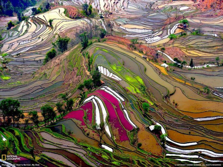 Рисовые поля в Китае. Tripzilla.