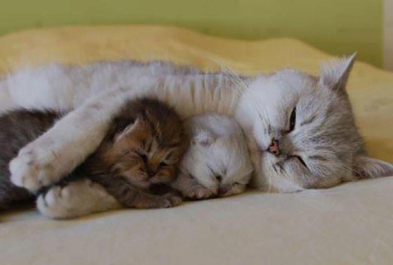 32. Рядом с мамой животные, кошка, сон