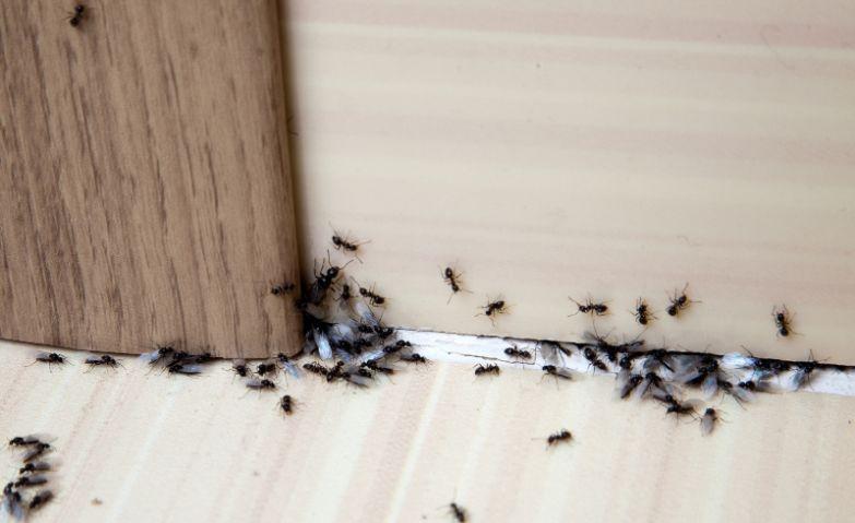 как избавиться от муравьев раз и навсегда