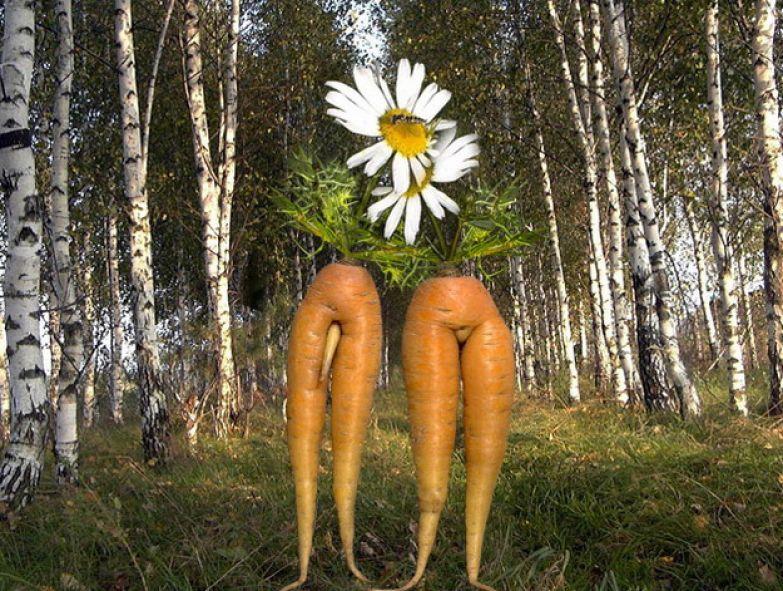 Любовь морковь 5