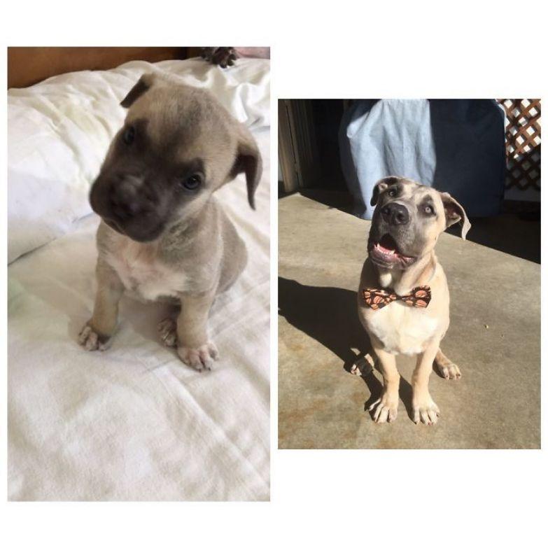Тео в 6 недель и в 6 месяцев до и после, животные, любимцы, мило, питомцы, собаки, трогательно, фото