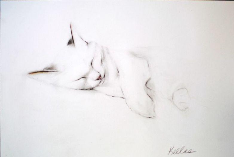 Кошечки 4