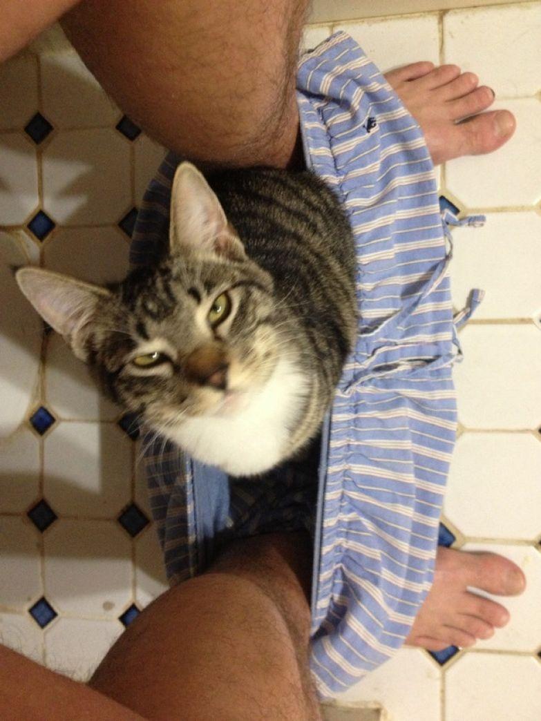 8. Нижнее белье тоже отличное место животные, коты