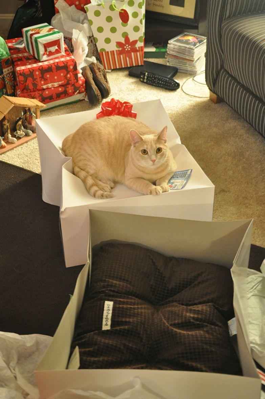 9. У кота на Рождество появилась новая кроватка.