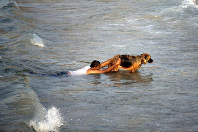 Дрессировка собак-спасателей